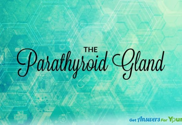 Your-Parathyroid-Gland